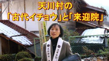 【動画】「天川村の巨大な「古代イチョウ」と「来迎院」にて~天河神社「牛王宝印」神事前のひととき~」をアップしました!